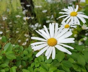 nature-3124483_1920.jpg